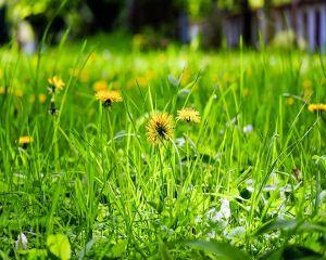 Top 5 plante pentru detoxifierea ficatului