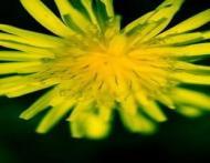Florile din farfurie