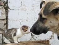 Ai pisica sau catel? Stii sa-i faci fericiti?