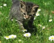 10 lucruri interesante pe care NU le stiai despre pisici