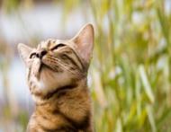 10 semne ca pisica ta chiar te iubeste