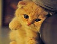 Pisica ta crede ca esti… o pisica gigant