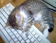12 semne ca suferi de dependenta de internet