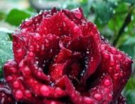 7 trucuri de frumusete pentru zile ploioase