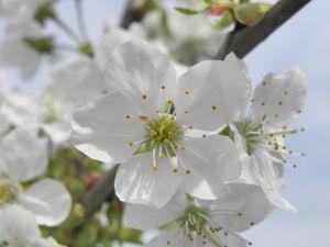 Mai multe emisii de carbon inseamna si mai multi alergici la polen