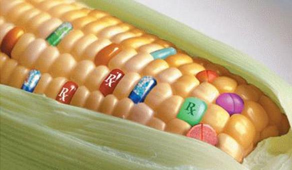 Blestemul sau binecuvântarea organismelor modificate genetic