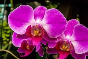 Tu stii cum sa ingrijesti corect o orhidee?