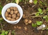 Retete culinare rapide: 6 retete fenomenale cu cartofi!