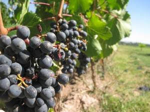 Cea mai veche presa de vin