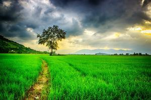 Studiu: Veniturile si viata bogata nu conduc spre prosperitate