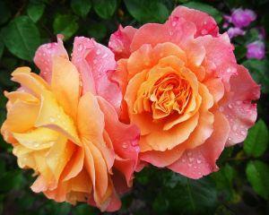 Cum sa iti amenajezi o gradina superba de flori