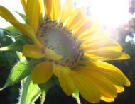 Pielea sau oasele: Dilema vitaminei D